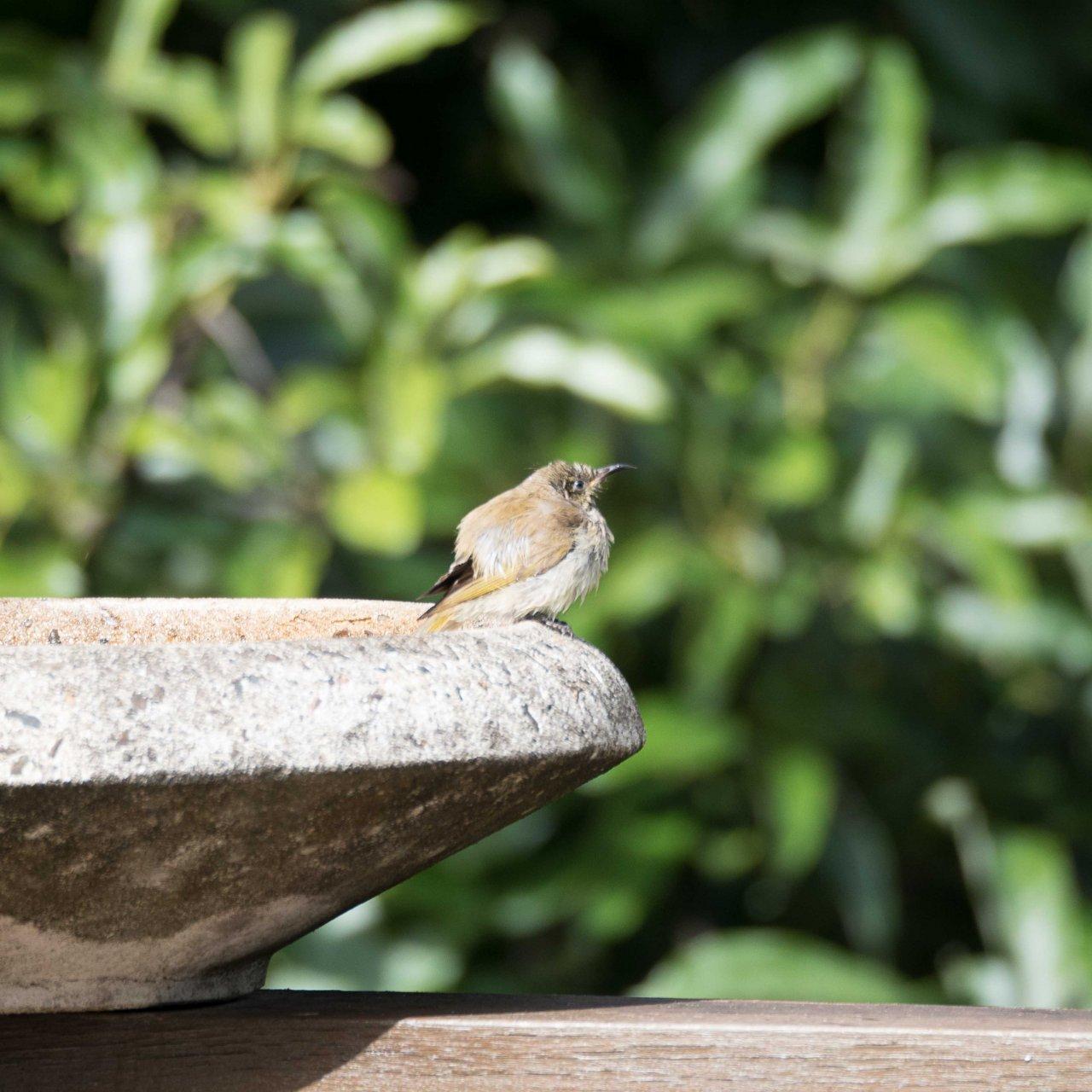 Bird Identification   BIRDS in BACKYARDS