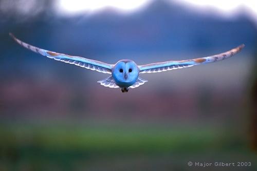 Beautiful Owl Birds In Backyards